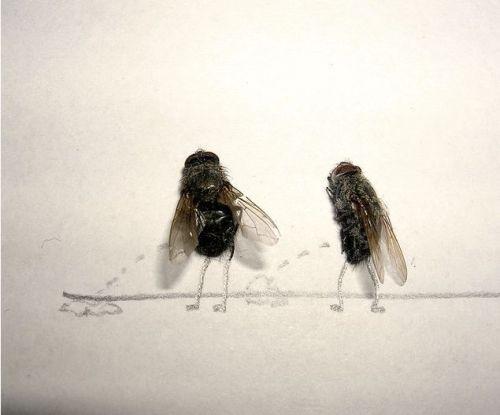 moscas2